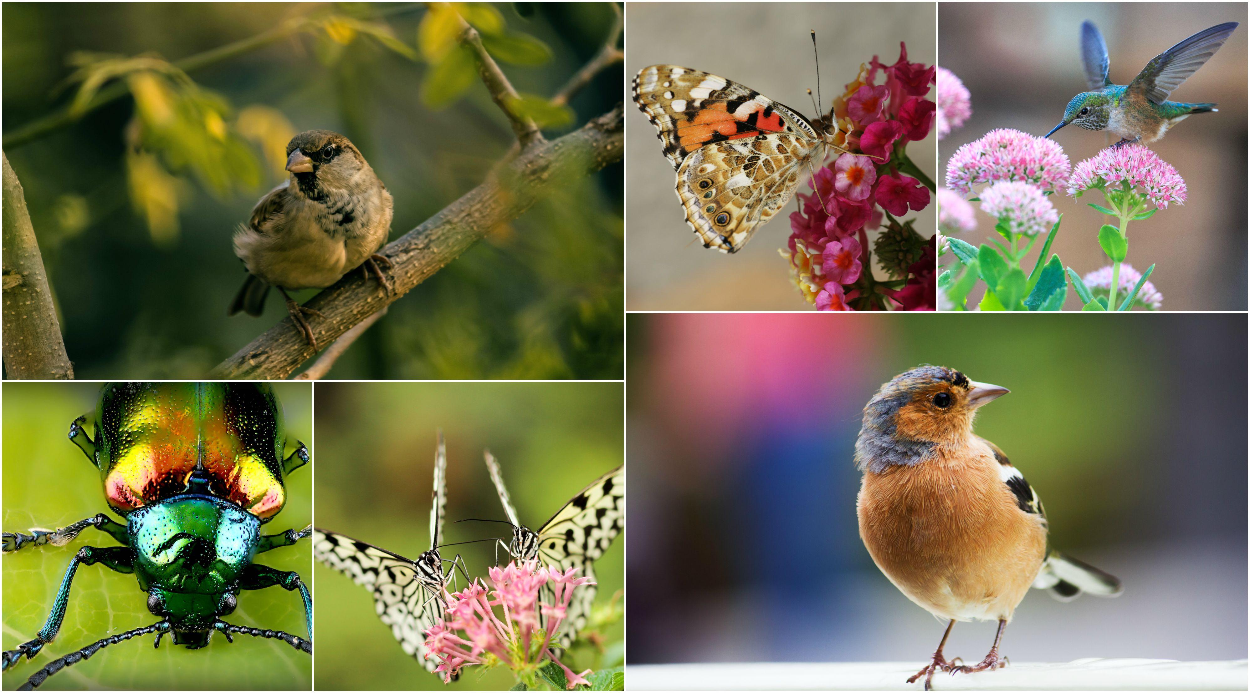 photos 1 oiseaux et papillons. Black Bedroom Furniture Sets. Home Design Ideas