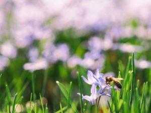 Photo gratuite grande taille sur la nature au printemps avec une abeille dans un champ de fleurs