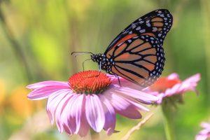 Photo gratuite fleur et papillon