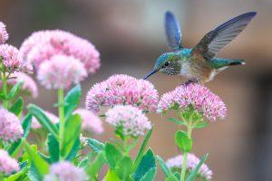 Photo gratuite fleurs et oiseau mouche