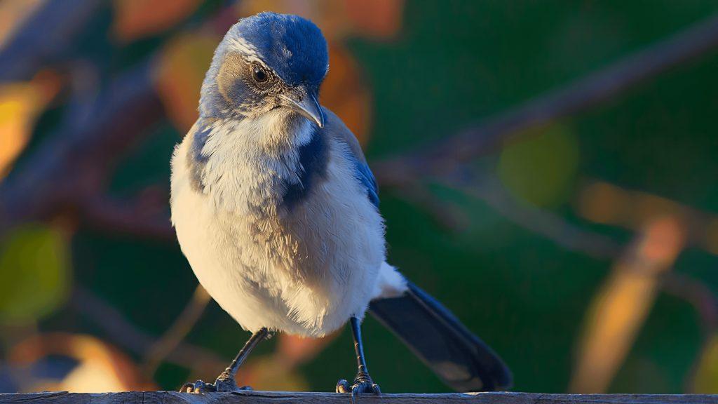 Photo gratuite oiseau