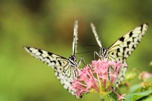 Photo gratuite de nature printemps papillons sur fleurs à imprimer