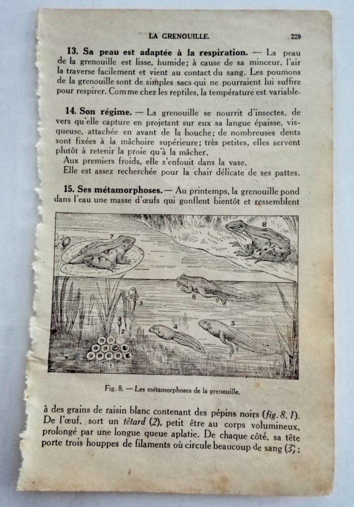 les grenouilles illustrées dans un ancien livre de science