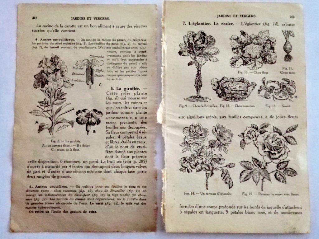 planche d'illustrations anciennes de plantes du jardin légumes fleurs et roses