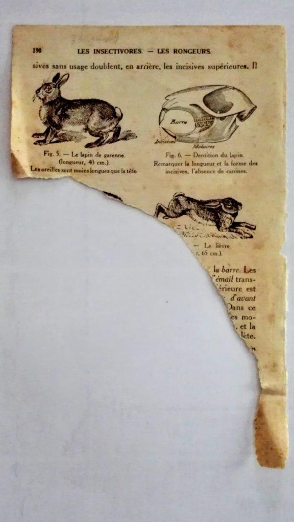 vieux livre déchiré sur les lapins