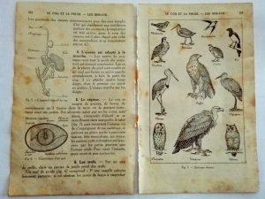 pages anciennes de vieux livre d'école leçon de choses les oiseaux