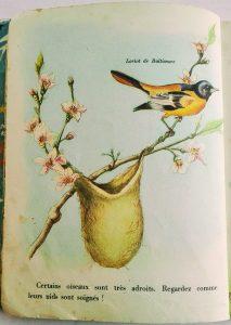 illustration vintage de nature au printemps livre pour enfants