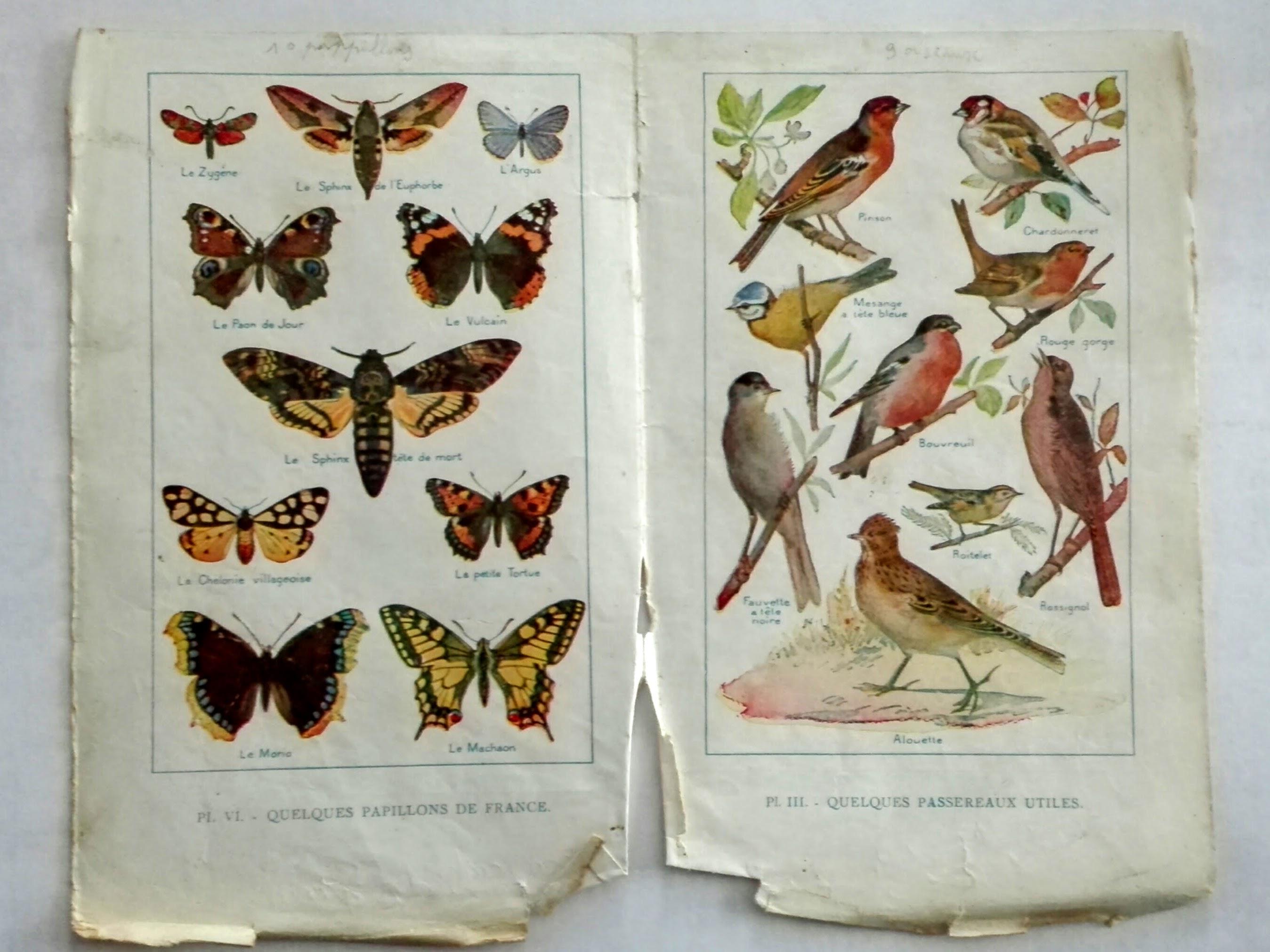 planche d'illustration de vieux livre oiseaux et papillons en couleurs