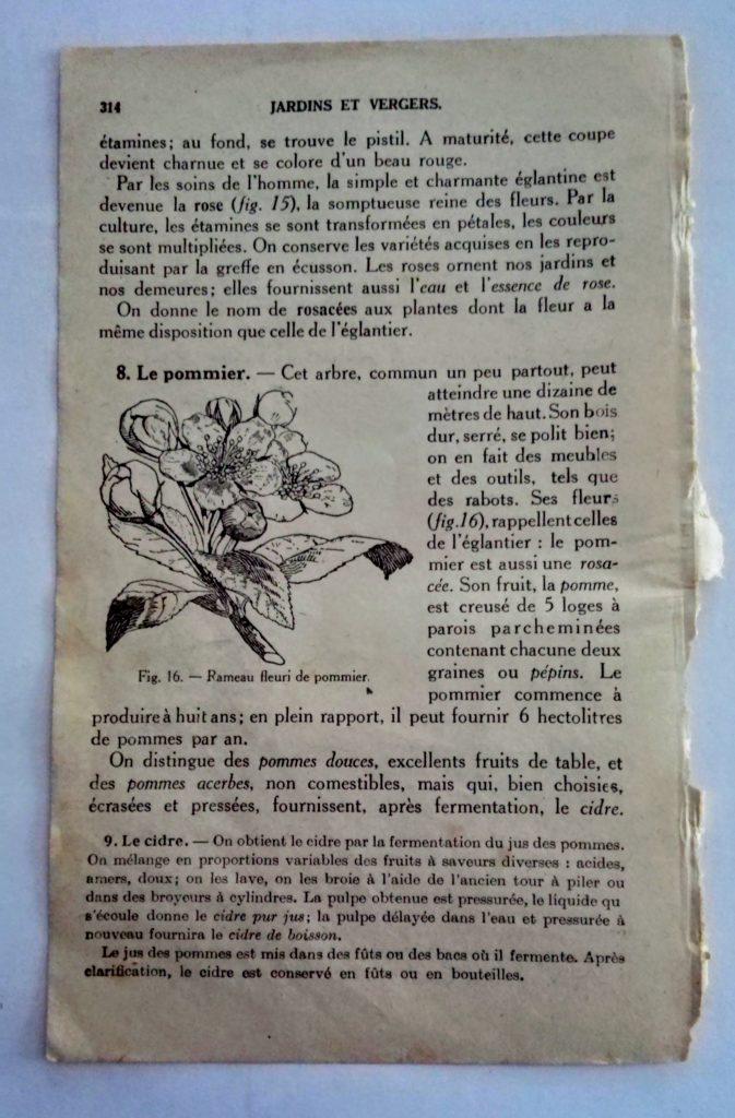 illustration ancienne fleur de pommier à imprimer pour le scrapbooking