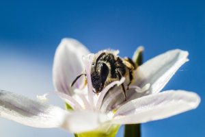 Photo gratuite de nature abeille