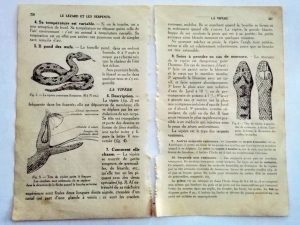 leçon de chose vieilles illustrations de serpents