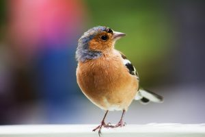 photo gratuite libre de droit oiseau multicolore